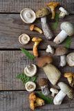 Cogumelos brancos selvagens comestíveis, boleto, russule, primas no fundo de madeira Foto de Stock