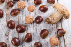 Cogumelos, castanhas, nozes Foto de Stock Royalty Free