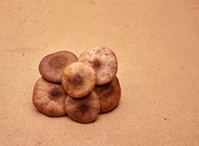 Cogumelos com chapéus Imagens de Stock Royalty Free