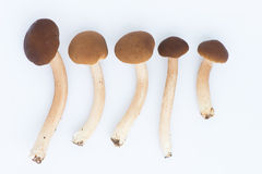 Cogumelos com fundo do isolamento Imagem de Stock