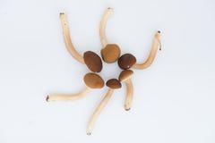 Cogumelos com fundo do isolamento Imagem de Stock Royalty Free