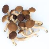 Cogumelos com fundo do isolamento Fotografia de Stock Royalty Free