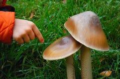 Cogumelos com mão da criança Fotografia de Stock Royalty Free
