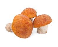 Cogumelos com tampão alaranjado Fotografia de Stock