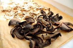 Cogumelos comestíveis Imagens de Stock
