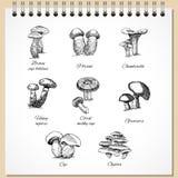 Cogumelos comestíveis da tinta ajustados Fotos de Stock Royalty Free