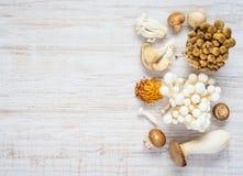 Cogumelos comestíveis no espaço da cópia fotos de stock royalty free