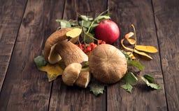 Cogumelos comestíveis selvagens do cepa-de-bordéus na tabela de madeira Imagem de Stock Royalty Free