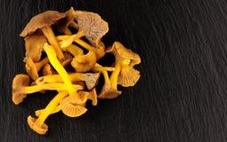Cogumelos comestíveis selvagens no fundo da ardósia Imagem de Stock Royalty Free