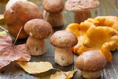 Cogumelos comestíveis Imagens de Stock Royalty Free