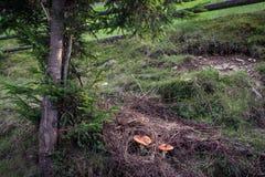 Cogumelos contaminados que escondem da máquina desbastadora cruel do cogumelo e de sua faca afiada Imagens de Stock Royalty Free