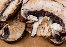 Cogumelos cortados de Brown imagem de stock