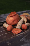 Cogumelos crus Imagem de Stock Royalty Free
