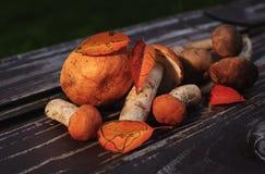 Cogumelos crus Imagens de Stock