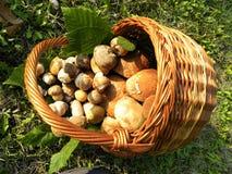 Cogumelos da cesta Imagem de Stock Royalty Free