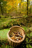 Cogumelos da cesta Fotografia de Stock