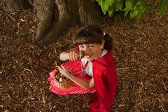 Cogumelos da colheita Imagens de Stock Royalty Free