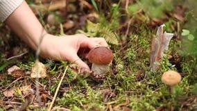 Cogumelos da colheita na floresta video estoque