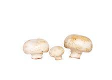 Cogumelos da família Imagem de Stock Royalty Free