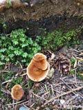 Cogumelos da floresta imagem de stock royalty free