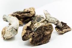 Cogumelos 3 da mágica Imagem de Stock Royalty Free