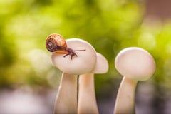 Cogumelos da queda em um caracol pequeno Foto de Stock Royalty Free