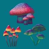 Cogumelos de alta qualidade de uma fantasia ajustados Fotos de Stock