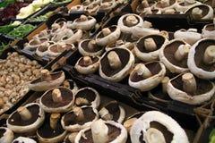 Cogumelos de botão brancos inteiros frescos Imagem de Stock