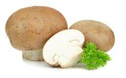 Cogumelos de Brown Foto de Stock