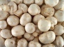 Cogumelos de campo Fotos de Stock Royalty Free