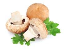Cogumelos de campo com verdes Imagem de Stock Royalty Free