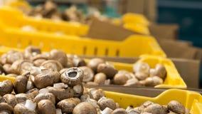 Cogumelos de Cremini Imagem de Stock Royalty Free