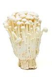 Cogumelos de Enoki Fotos de Stock