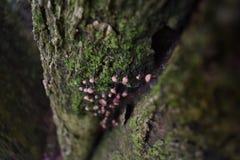 Cogumelos de Hongos Imagens de Stock