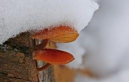 Cogumelos de inverno sob a neve macia fotos de stock