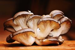 Cogumelos de ostra Imagem de Stock Royalty Free