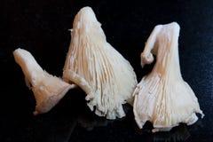 Cogumelos de ostra foto de stock