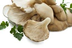 Cogumelos de ostra Imagens de Stock