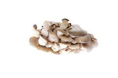 Cogumelos de ostra comestíveis no fundo branco Fotos de Stock