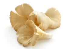Cogumelos de ostra frescos Imagem de Stock Royalty Free