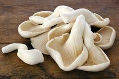 Cogumelos de ostra na madeira velha Imagens de Stock Royalty Free