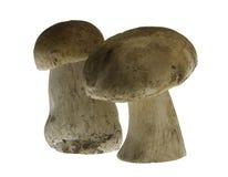 Cogumelos de Porcini Fotografia de Stock