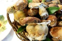 Cogumelos de Porcini na cesta Imagem de Stock Royalty Free