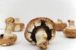 Cogumelos de Portobello Imagens de Stock Royalty Free