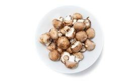 Cogumelos de Portobello do bebê Imagens de Stock