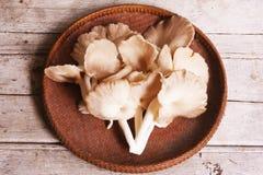 Cogumelos de Sajor-caju Imagens de Stock