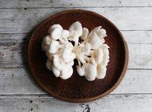 Cogumelos de Sajor-caju Foto de Stock