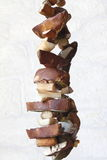 Cogumelos de secagem Imagens de Stock