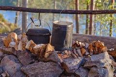 Cogumelos de secagem Foto de Stock
