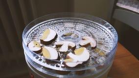 Cogumelos de secagem do porcini da mulher video estoque